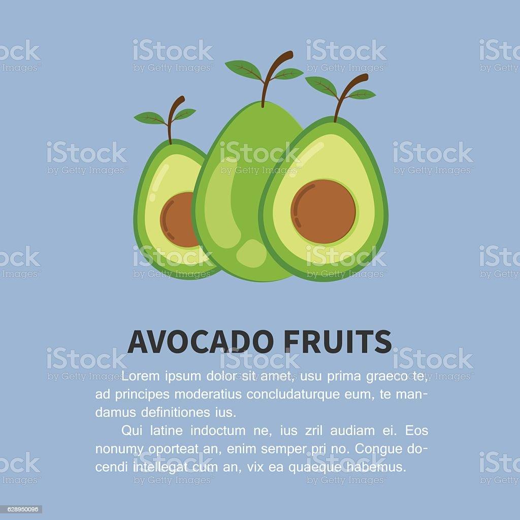 avocado info-graphic. fruits vector illustration. avocado fruit flat style design vector art illustration