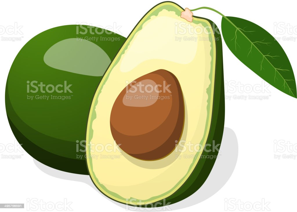 Avocado vector isolated on white background. vector art illustration