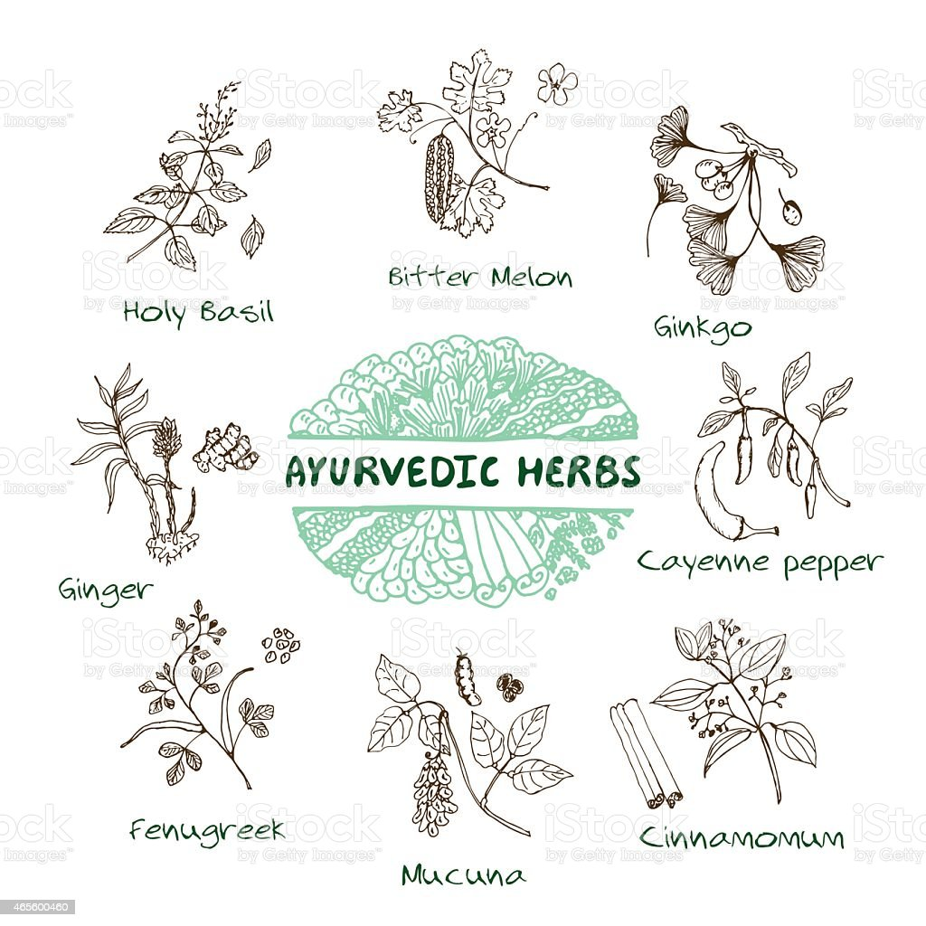 Ayurvedic herbs collection vector art illustration
