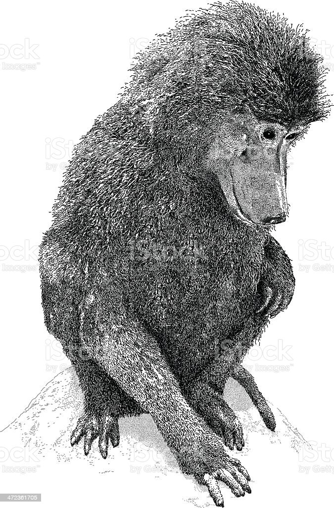 Baboon royalty-free stock vector art