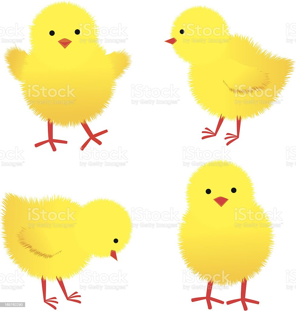 Baby Chicks vector art illustration