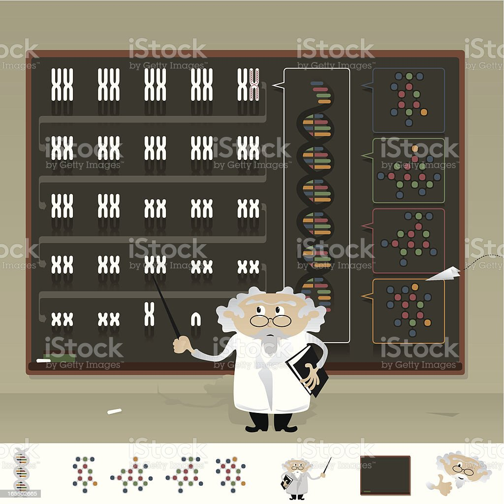 Back in Biology Class: How does Your DNA work? royalty-free stock vector art