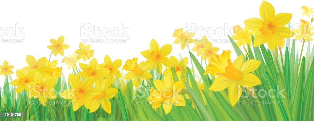 Background with bottom border of yellow daffodils vector art illustration