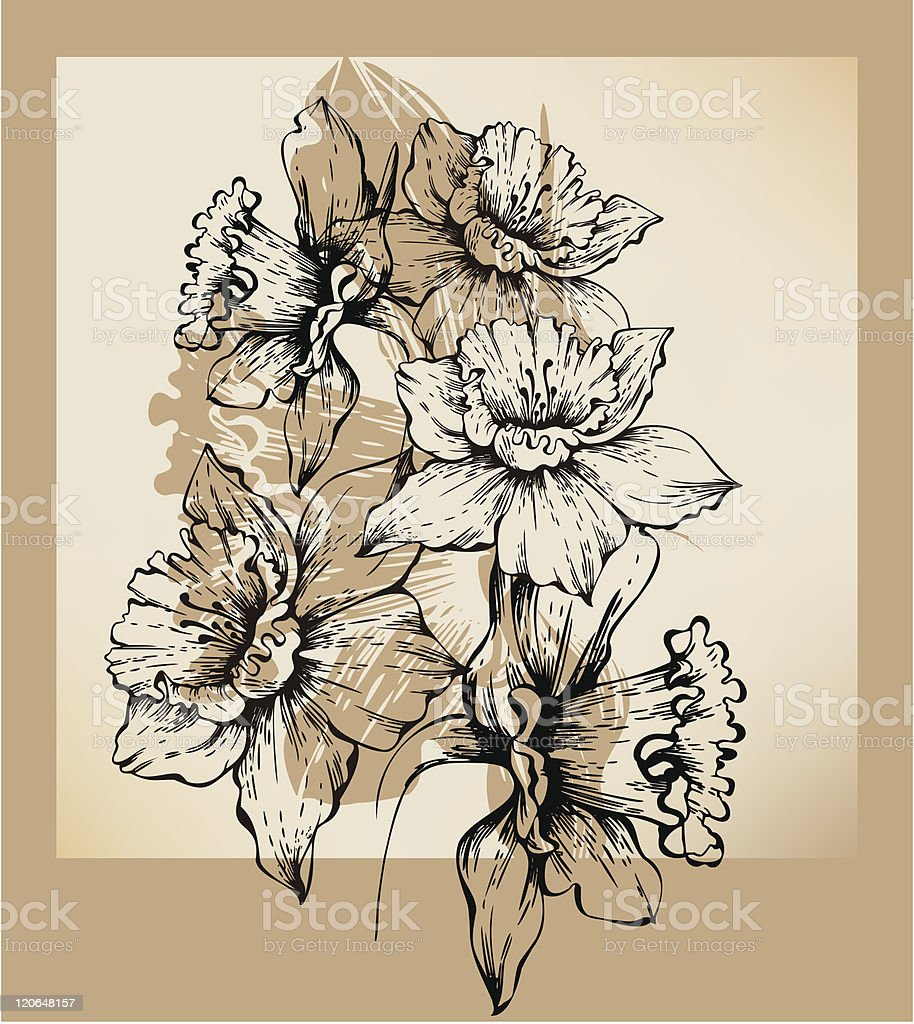 Background with drawing daffodils royalty-free stock vector art