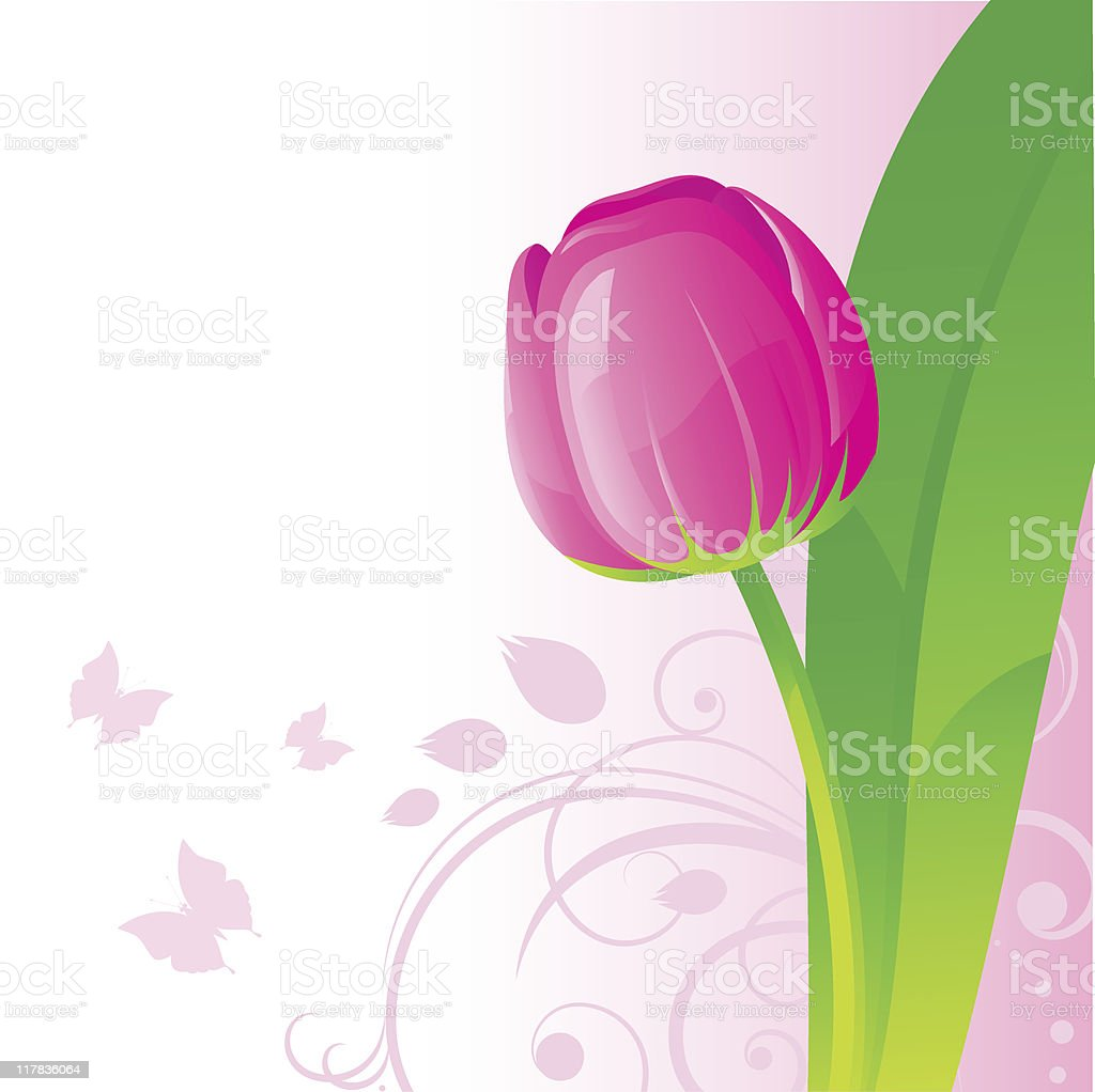 Background with pink tulip vector art illustration
