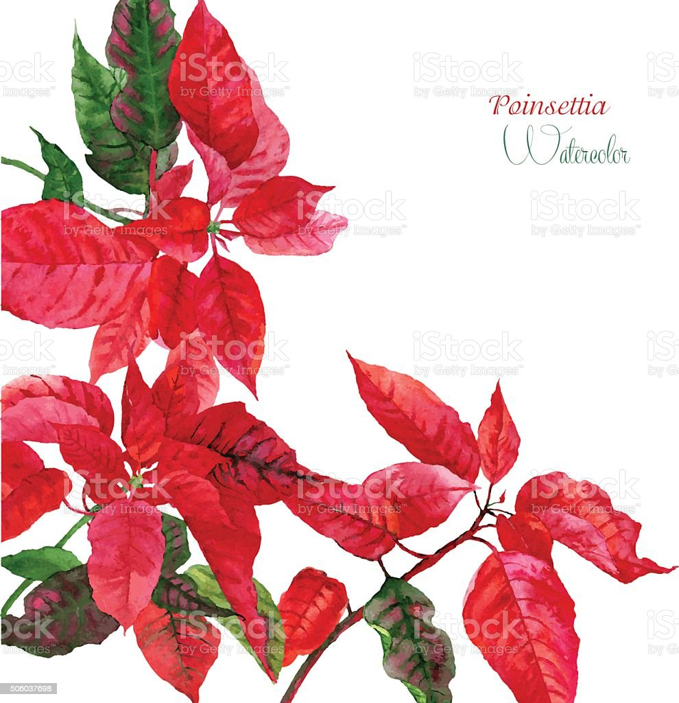 Background  with red poinsettia vector art illustration