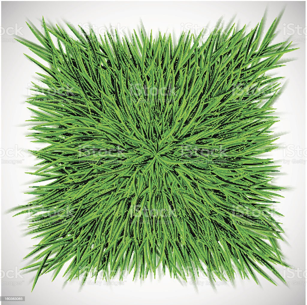 Background with square of grass royalty-free stock vector art