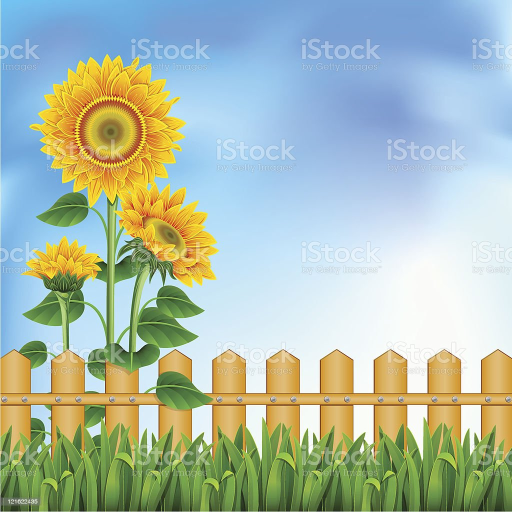 Background with sunflowers. Mesh. royalty-free stock vector art
