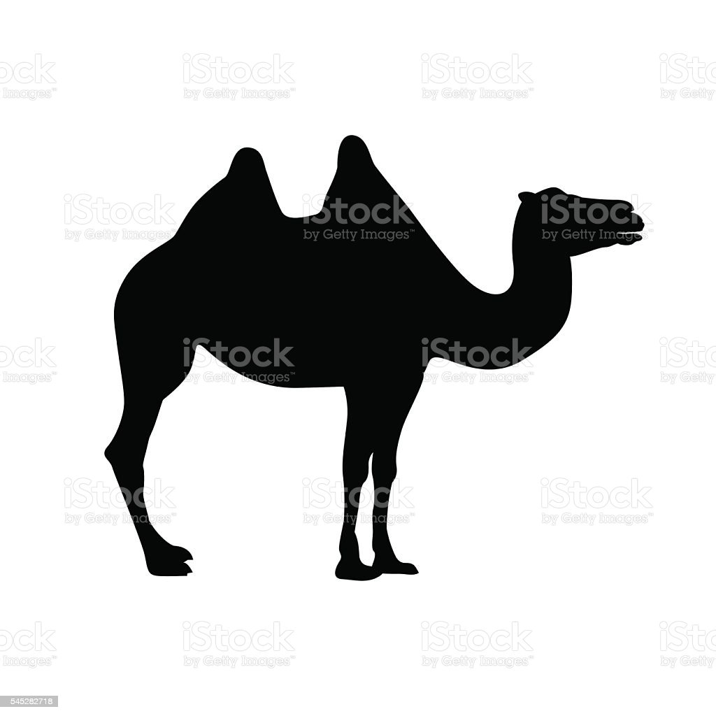 bactrian camel silhouette vector art illustration