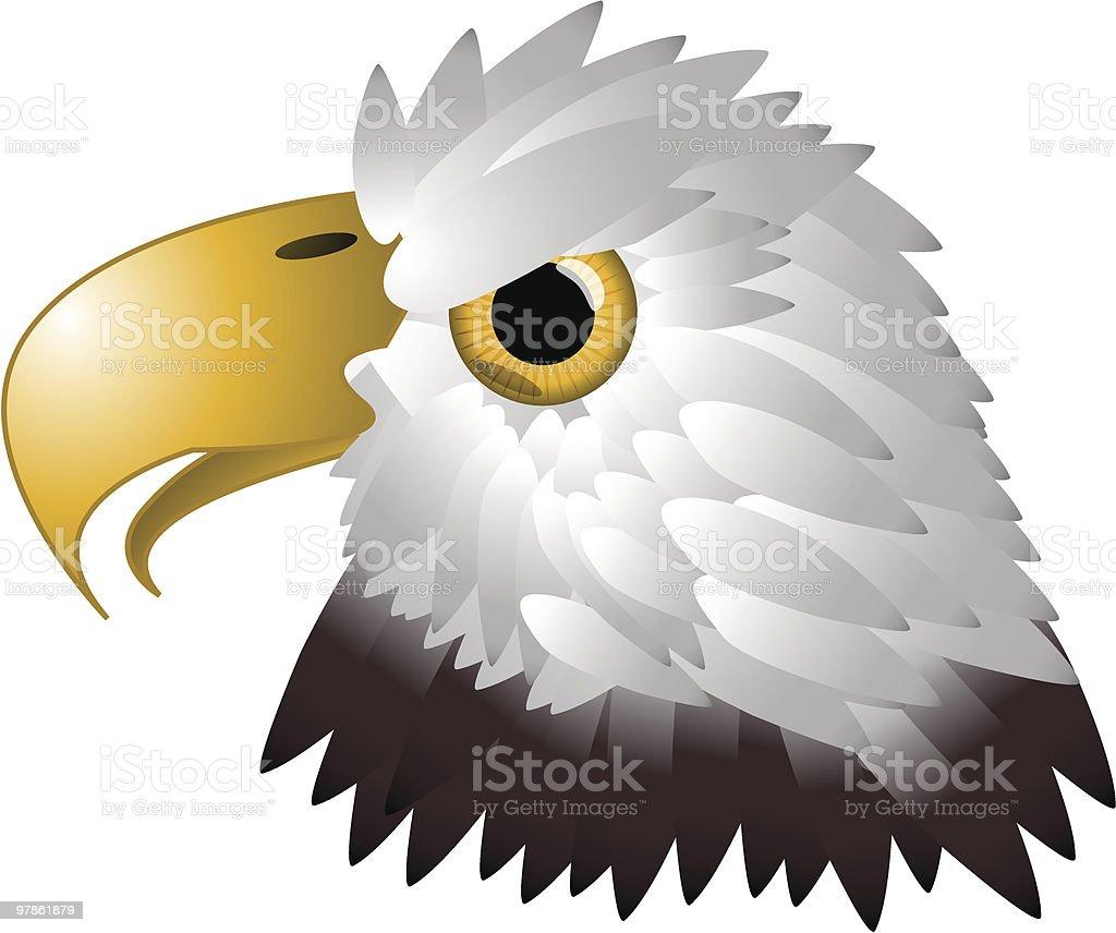 bald eagle illustration royalty-free stock vector art