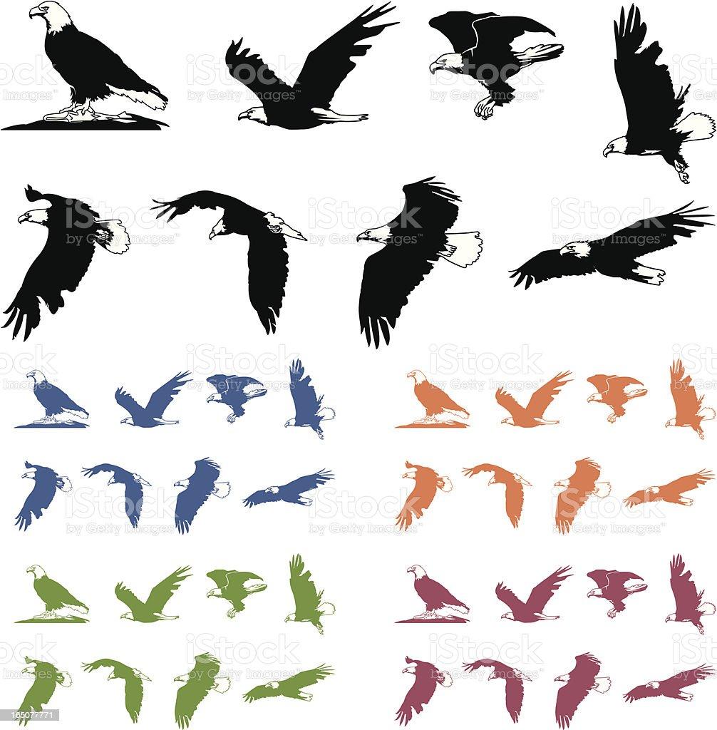 Bald Eagle Silhouettes vector art illustration