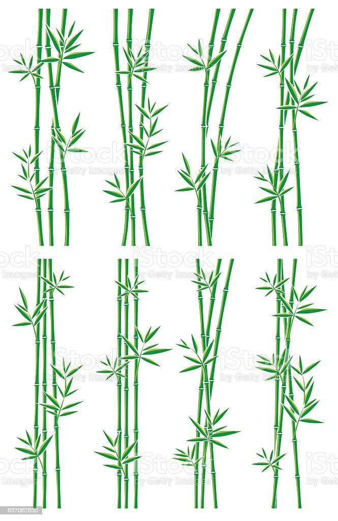 Bamboo collection set. Vector vector art illustration