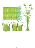 Bamboo Tree Isolate Collection Set Vector