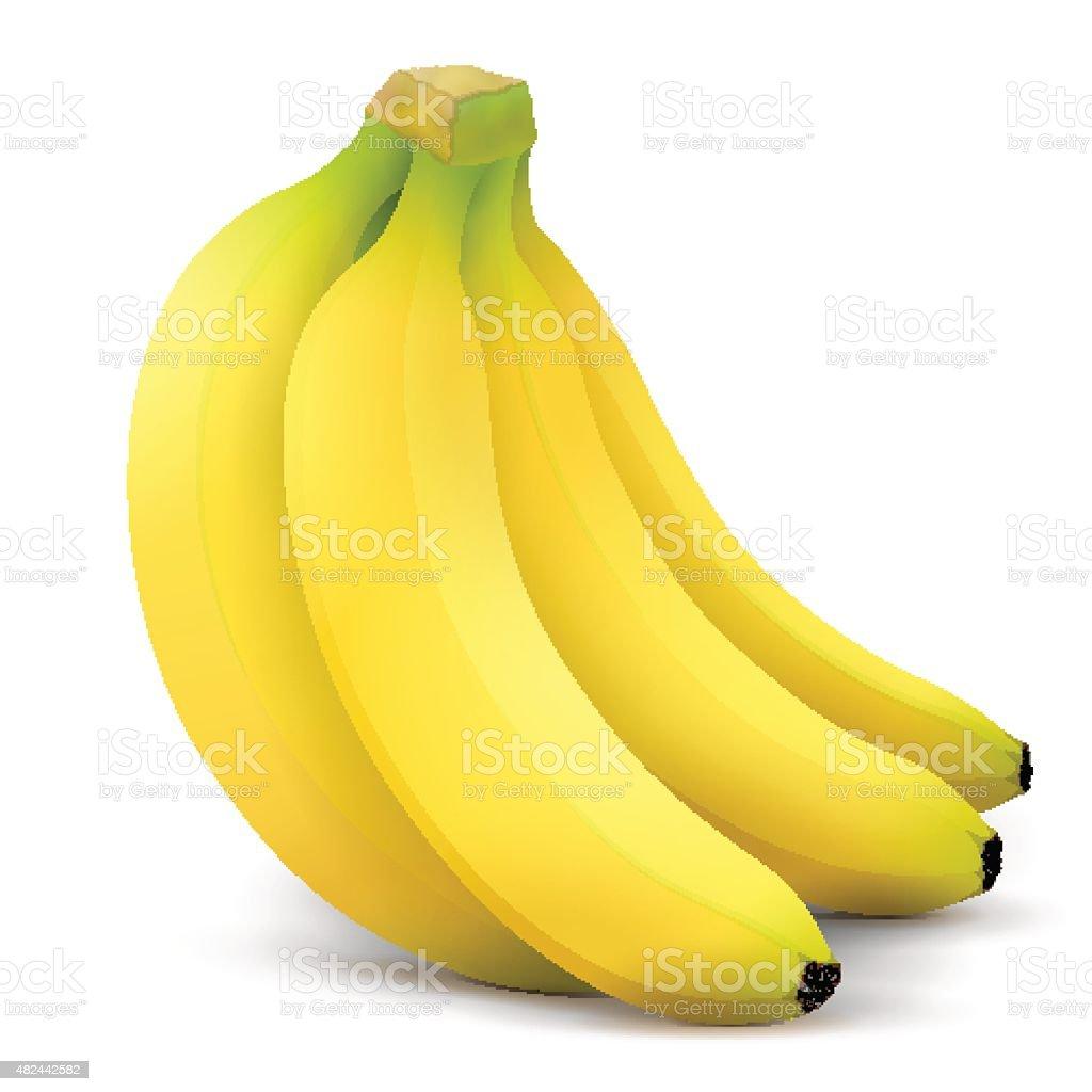 Banana fruit close up vector art illustration