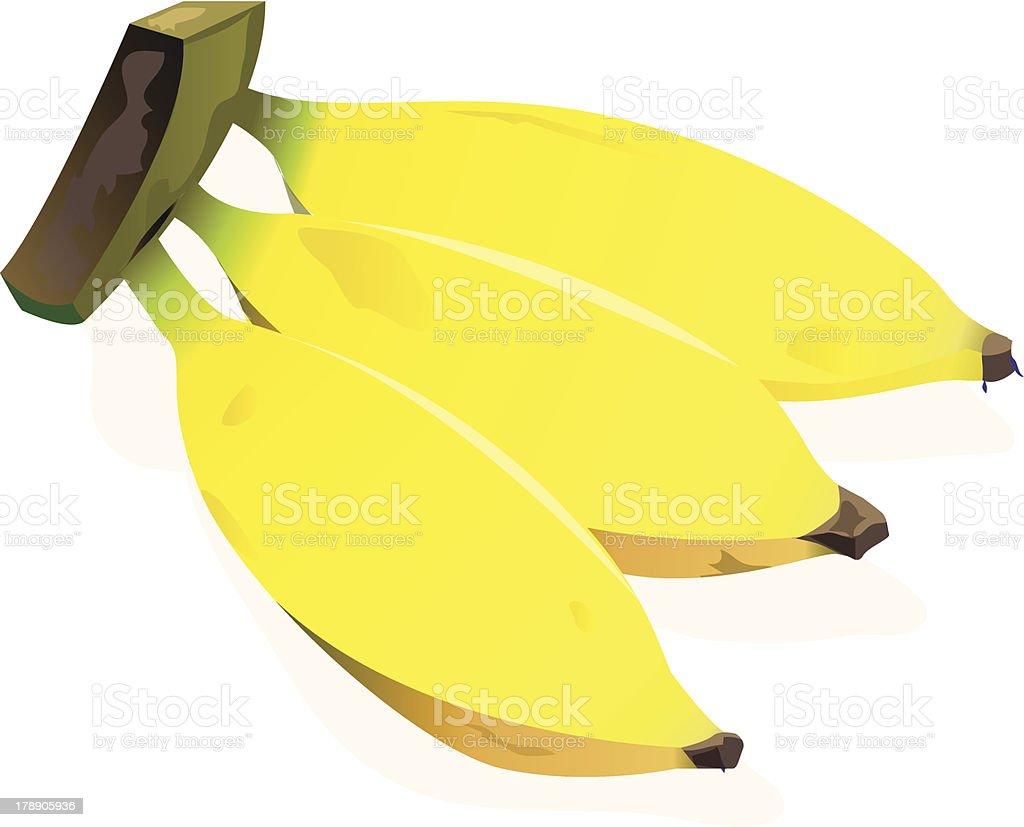Banana of Indonesian royalty-free stock vector art