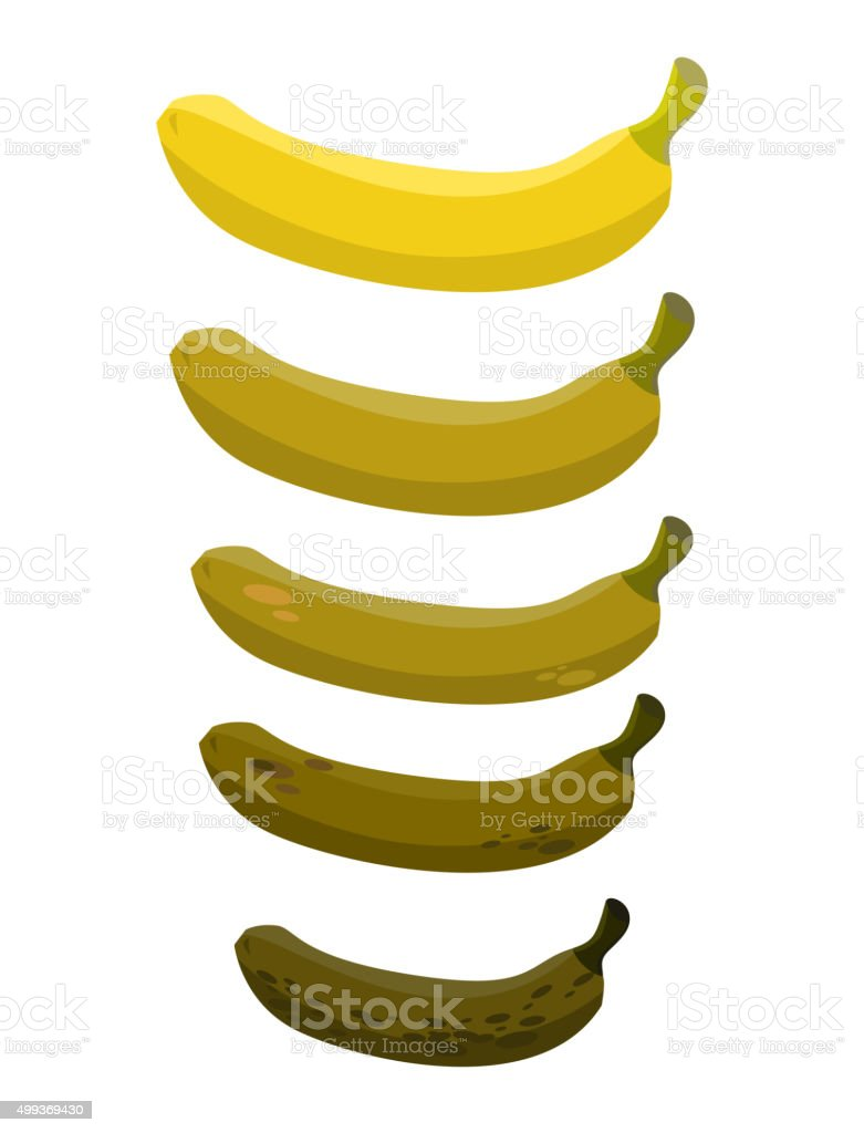 Banana. Stage of rotting banana. Beautiful yellow fresh banana a vector art illustration
