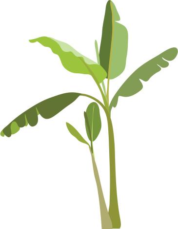 banana tree leaves vector - photo #19
