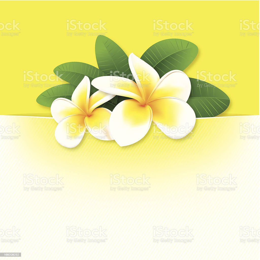 banner with orchids, floral vector background royalty-free stock vector art