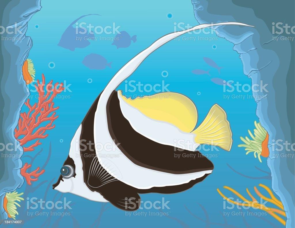 Bannerfish / Poisson-cocher stock photo