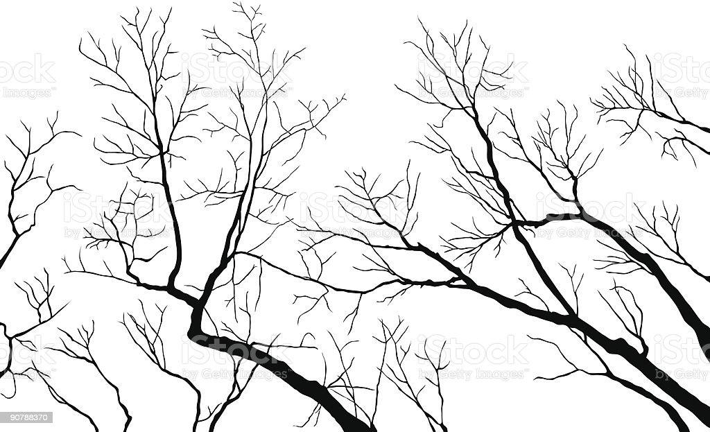 Bare Branches vector art illustration
