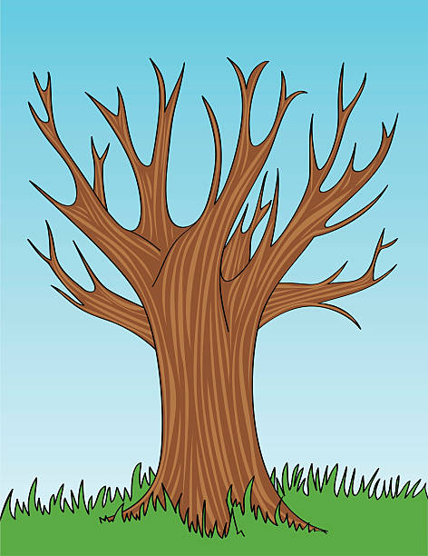 Bare Tree Clip Art, Vector Images & Illustrations - iStock