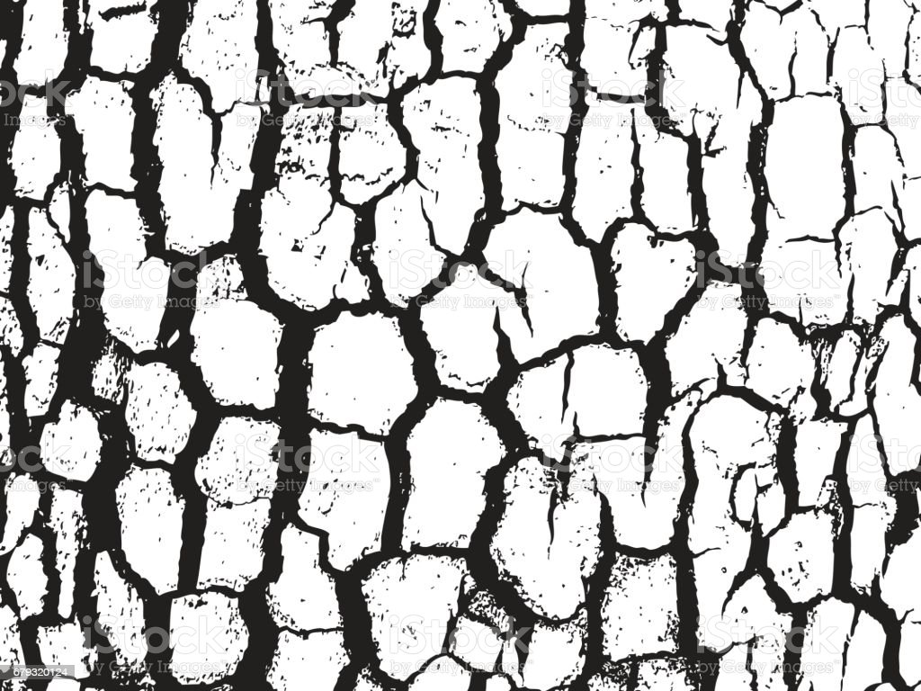 Bark close up texture vector illustration. Black and white colors vector art illustration