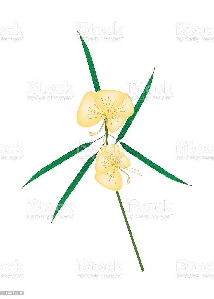 Barleria Lupulina Lindl Flower on White Background vector art illustration