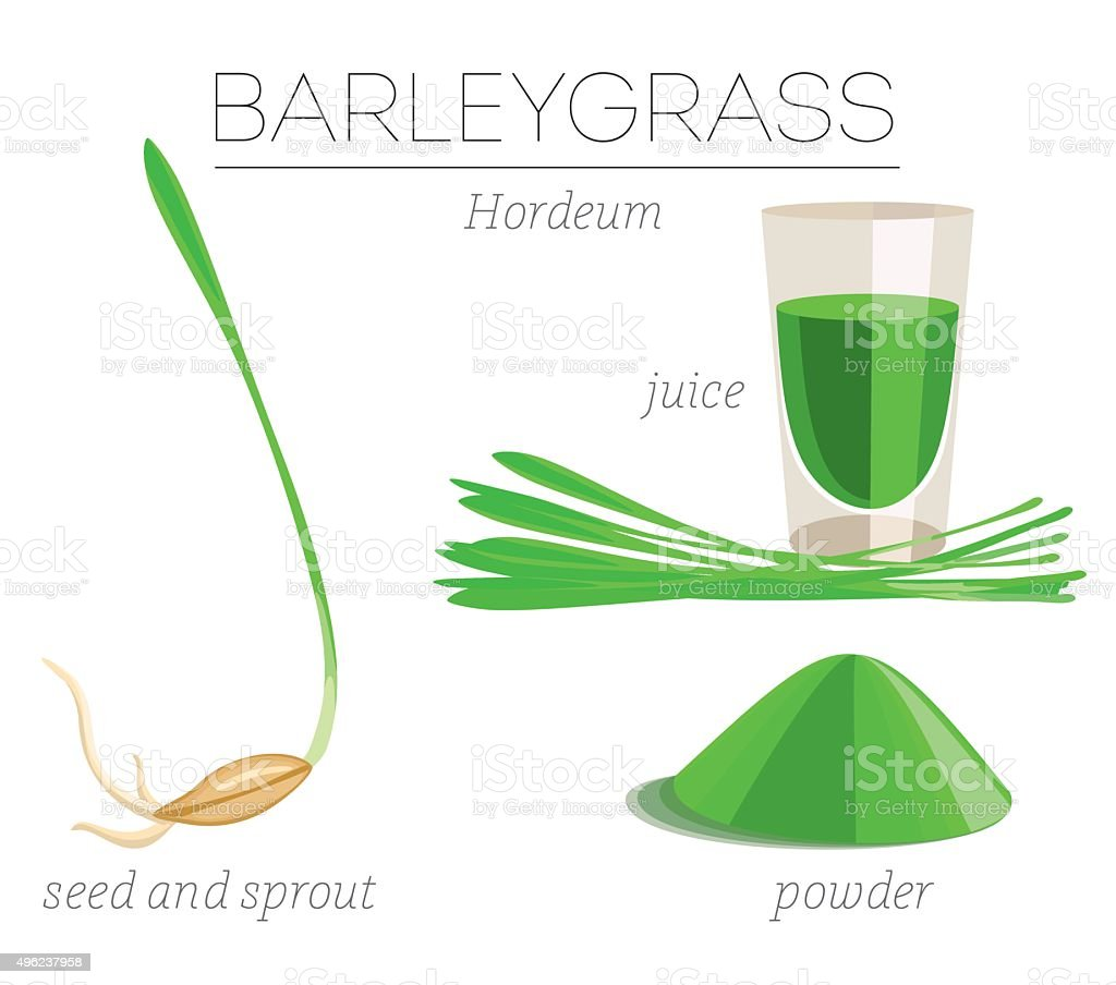 Barleygrass superfood vector art illustration