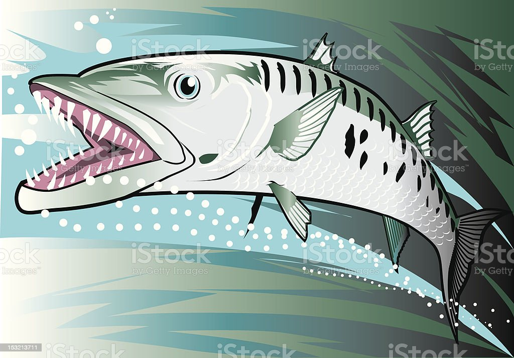 Barracuda royalty-free stock vector art