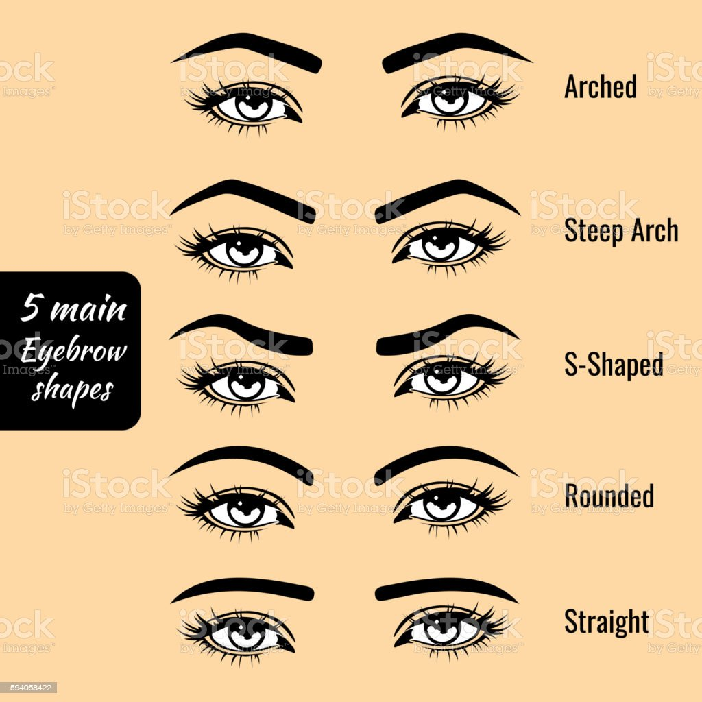 Basic eyebrow shape types vector illustration vector art illustration
