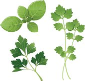 basil, parsley, cilantro