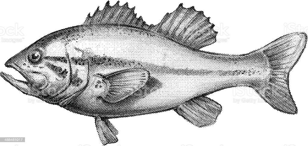 bass fish vector art illustration