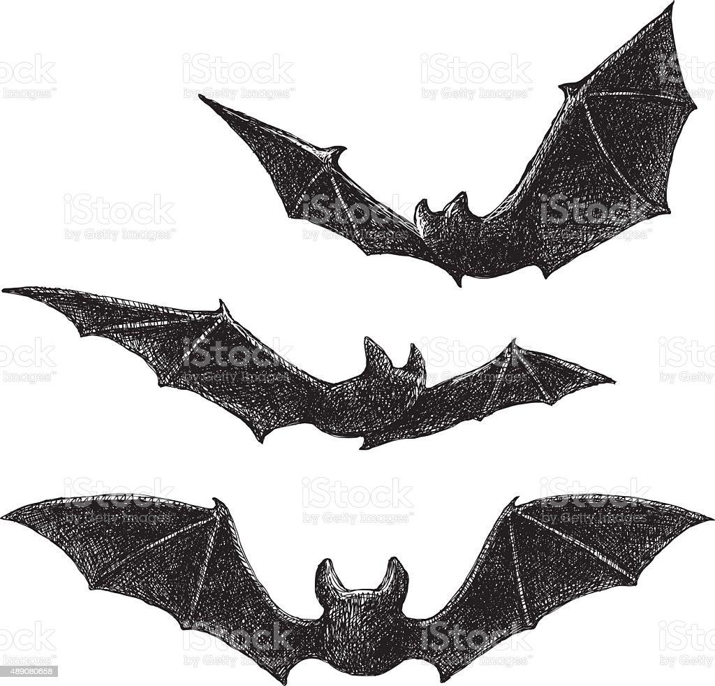 Bats Drawing vector art illustration