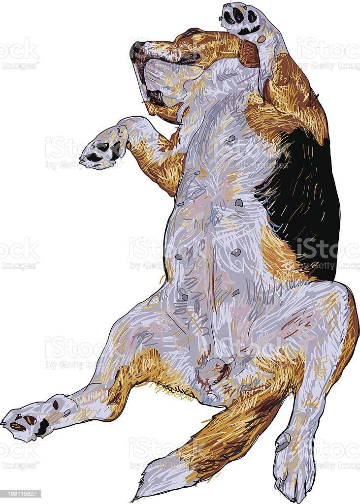 Beagle royalty-free stock vector art