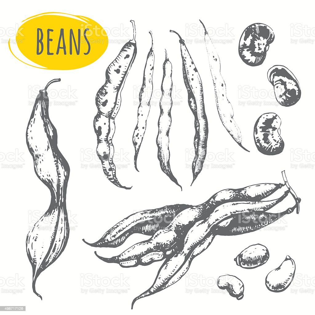 Beans and legumes. Set of hand drawn food. vector art illustration