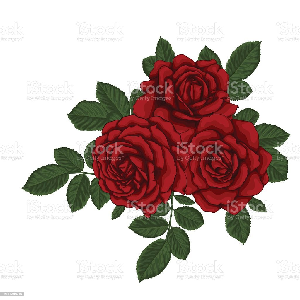 beautiful bouquet with three red roses and leaves. Floral arrangement. vector art illustration
