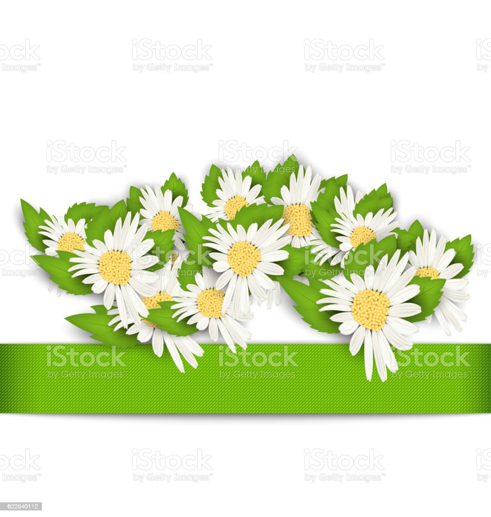Beautiful Flowers Camomile with Shadows on White Background vector art illustration
