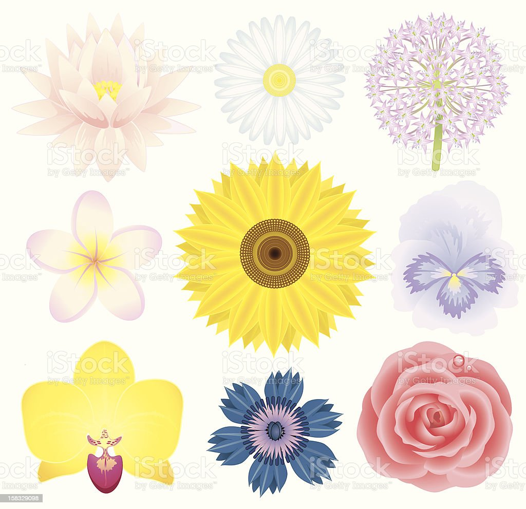 Beautiful flowers collection royalty-free stock vector art