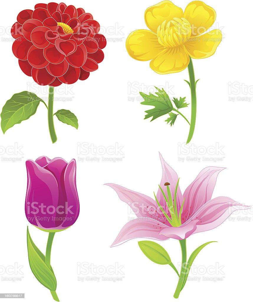 Beautiful flowers set five vector art illustration