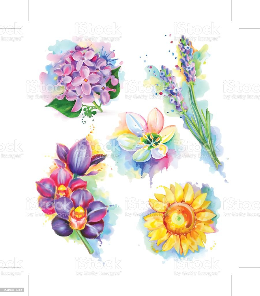 Beautiful flowers, watercolor painting, mesh vector icon set vector art illustration