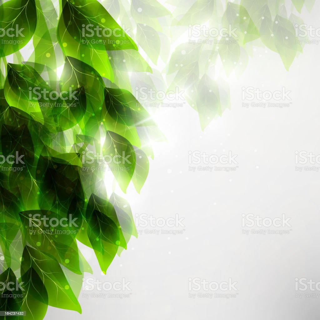 Beautiful green leaves royalty-free stock vector art