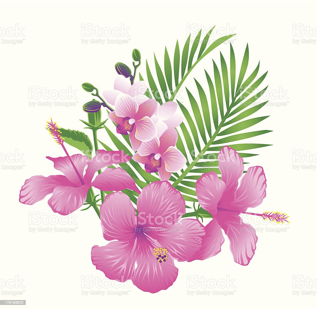 Beautiful hibiscus and orchid flowers royalty-free stock vector art