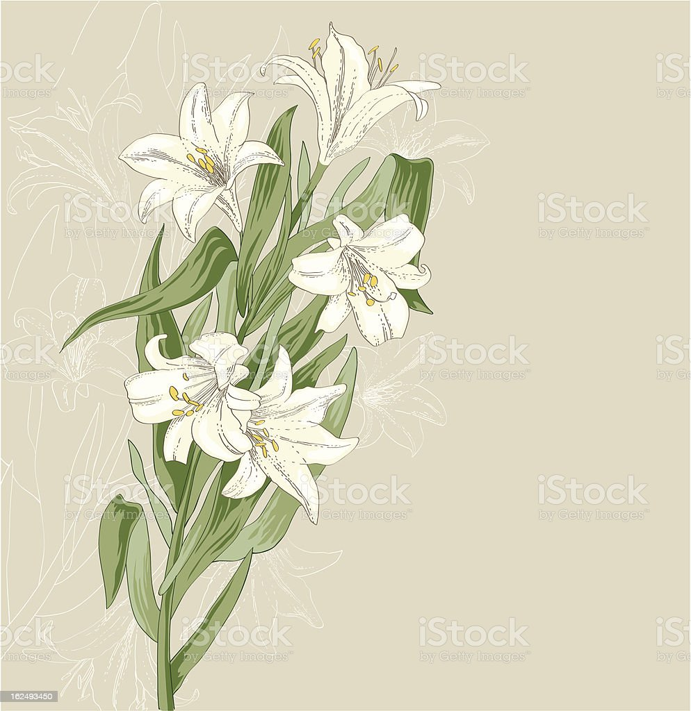A beautiful illustration of white lilies vector art illustration