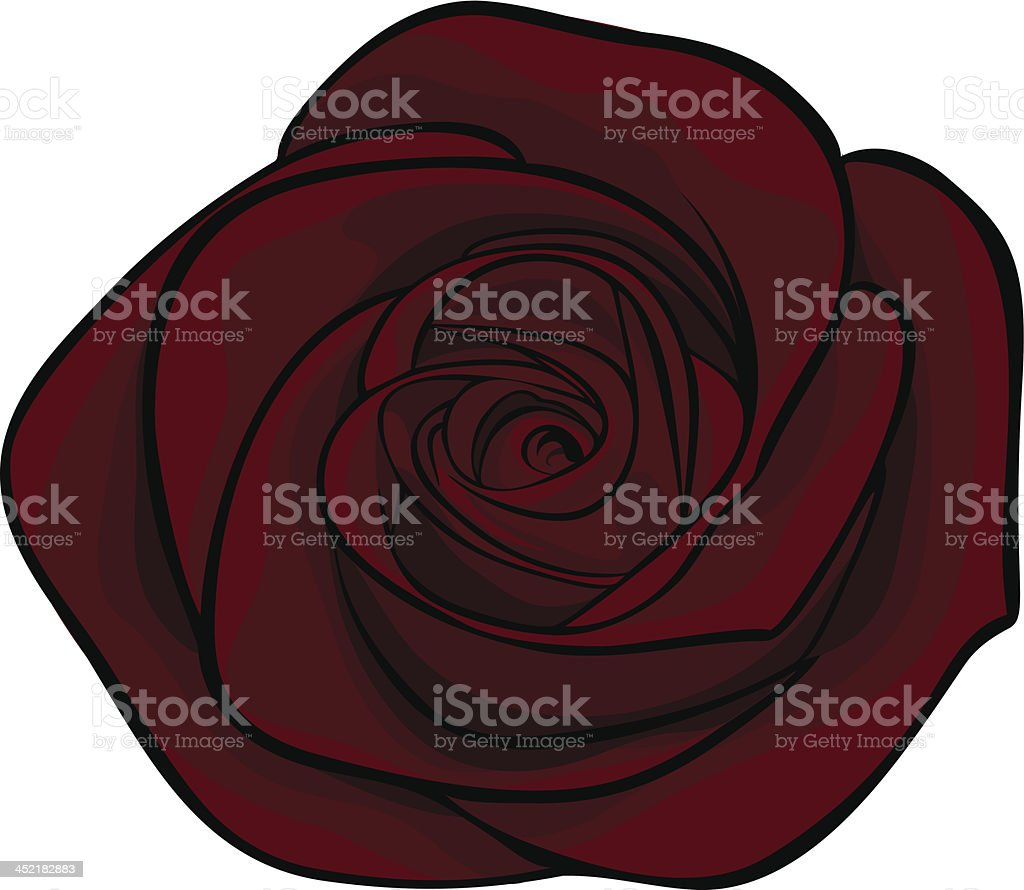 beautiful maroon roses alone, isolated on a white background royalty-free stock vector art