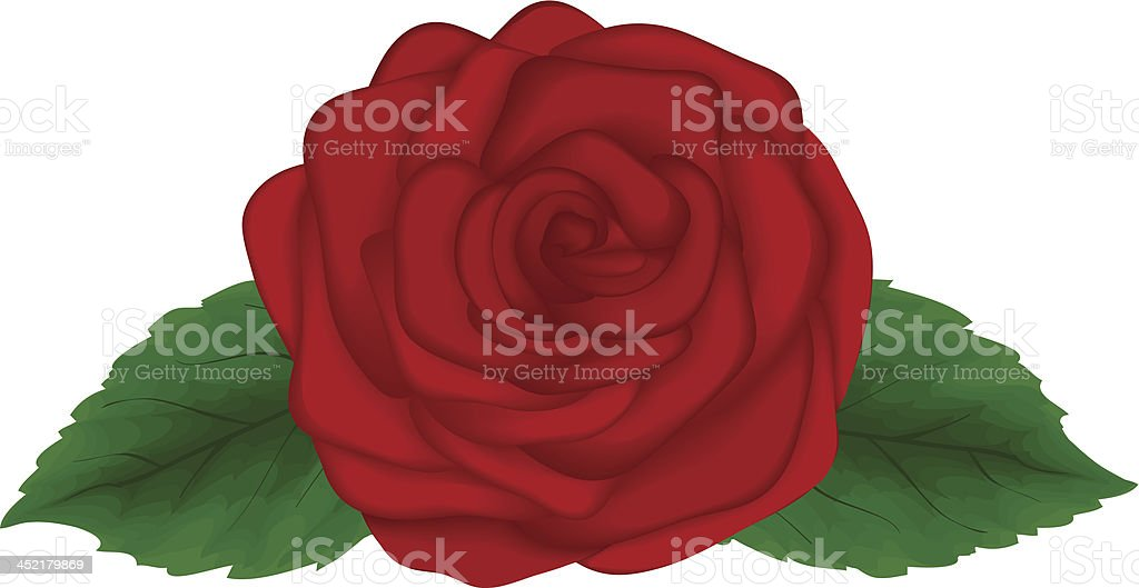 Beautiful red rose with green leaves isolated on white background royalty-free stock vector art