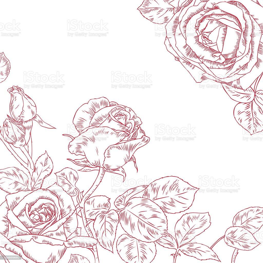 Beautiful Rose vector art illustration