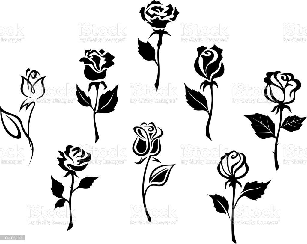 Beautiful roses set vector art illustration