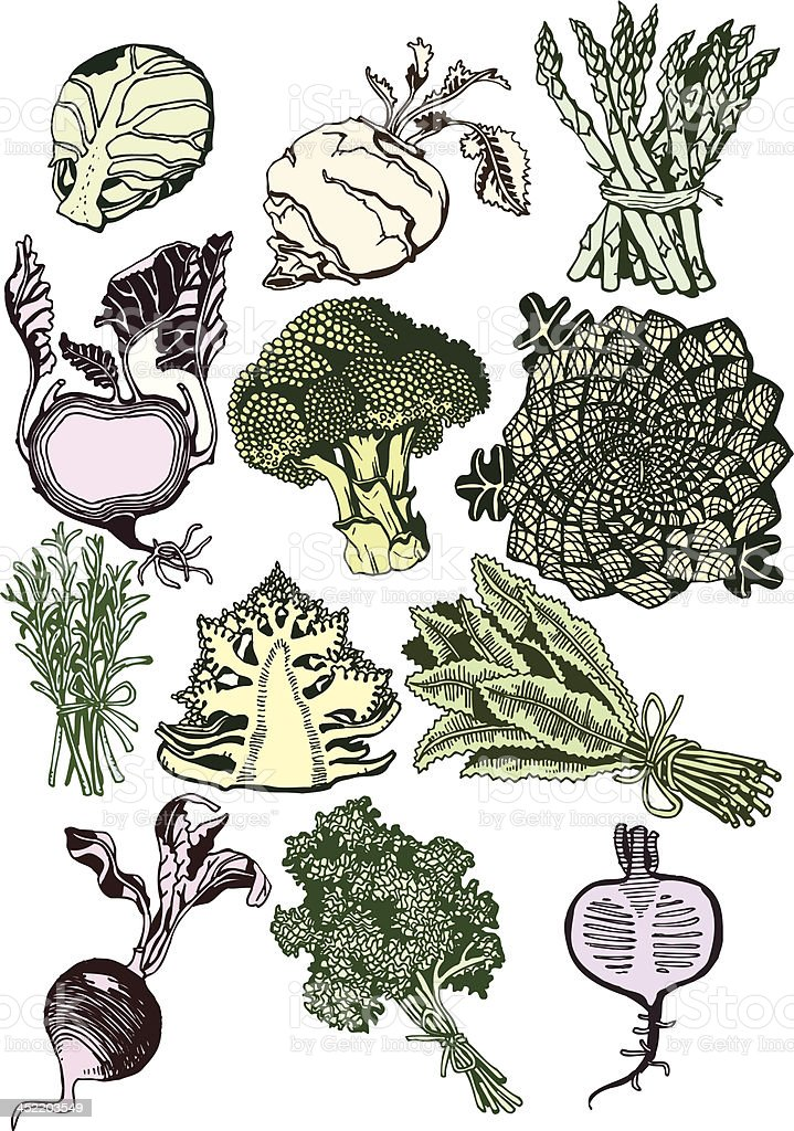 Beautiful Vegetables Collection vector art illustration