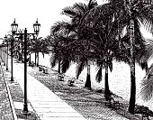 Beautiful Walking Path With Palm Trees and Water's Edge