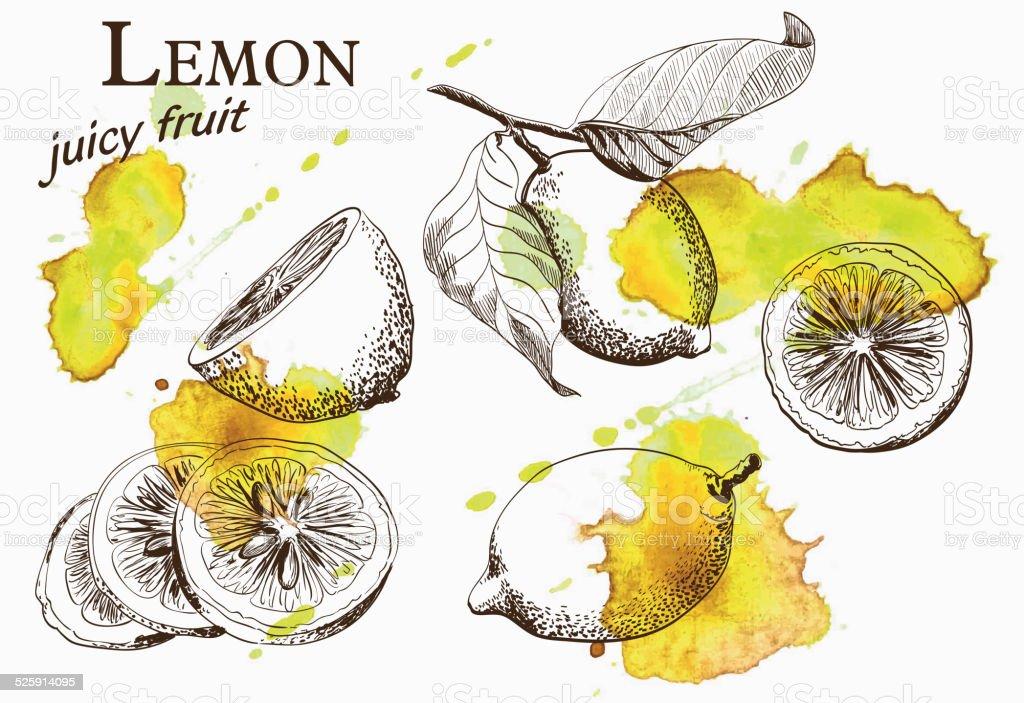 beautiful yellow lemon vector art illustration